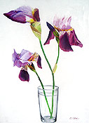 painting of irises, still life painting by artist Donald Felber